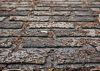 Threadgills Roofing Images